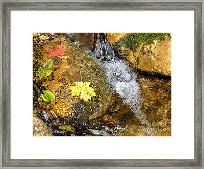 Fall Colors 6389 Framed Print