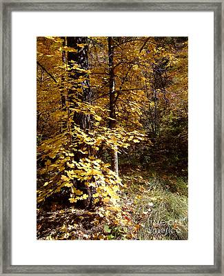 Fall Colors 6404 Framed Print