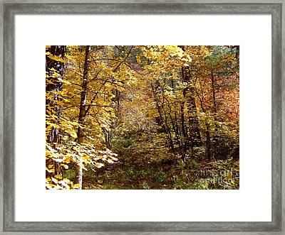Fall Colors 6405 Framed Print