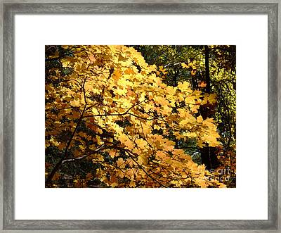 Fall Colors 6407 Framed Print
