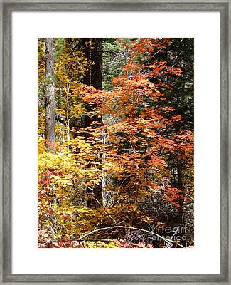 Fall Colors 6412 Framed Print