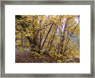 Fall Colors 6435 Framed Print