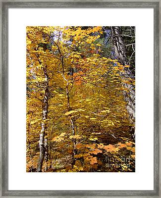 Fall Colors 6446 Framed Print