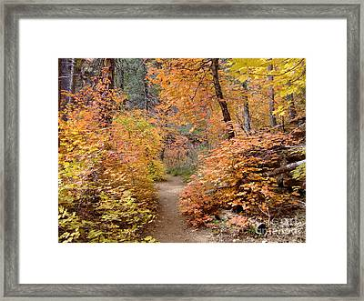 Fall Colors 6454 Framed Print