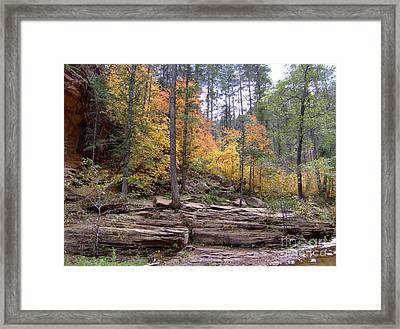 Fall Colors 6463-02 Framed Print