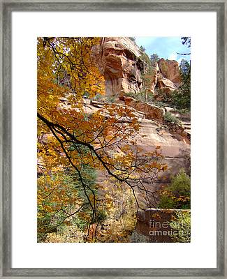 Fall Colors 6497 Framed Print