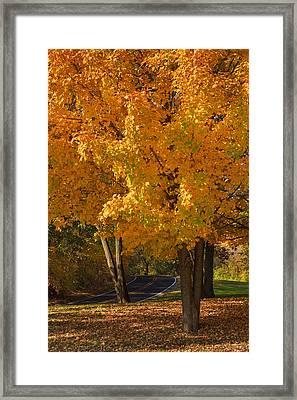 Fall Colors Framed Print by Adam Romanowicz