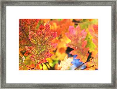 Framed Print featuring the photograph Fall Colors by Arkady Kunysz