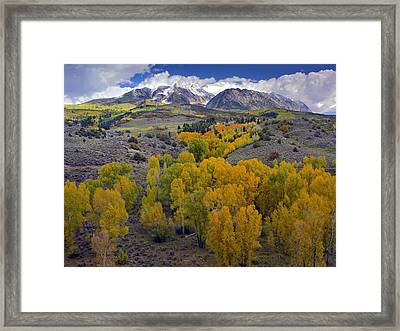 Fall Colors At Chair Mountain Colorado Framed Print by Tim Fitzharris