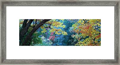 Fall Colors At Fourth Of July Canyon Framed Print