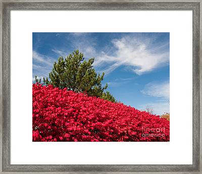 Fall Colors Framed Print by Dale Nelson