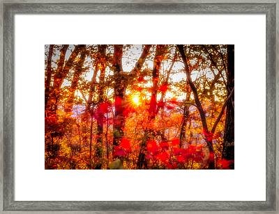 Fall Colors Framed Print by David Cote