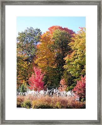 Fall Colors Framed Print by Gaetano Salerno