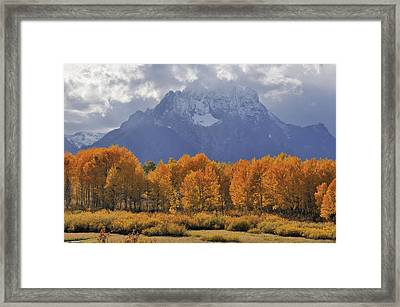 Fall Colors In Grand Teton National Park Framed Print by Kriss Russell