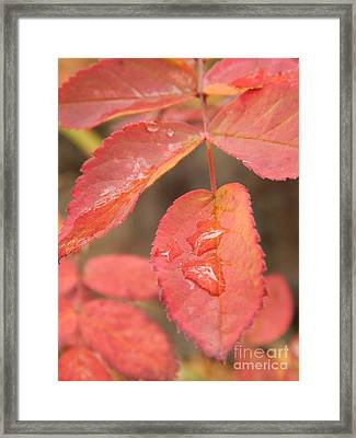 Fall Colors Framed Print by Jennifer Kimberly