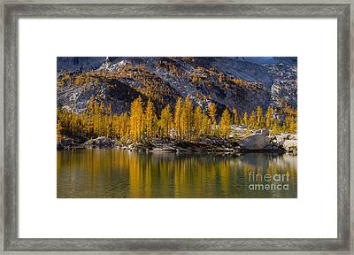 Fall Colors Larches Reflection Framed Print by Mike Reid