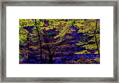 Fall Colors Framed Print by Louis Dallara