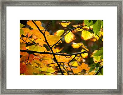 Fall Colors Framed Print by Optical Playground By MP Ray