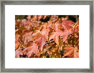 Fall Colors Framed Print by Shane Kelly