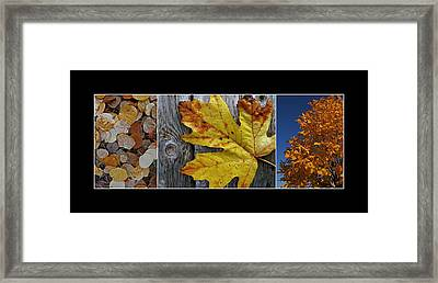 Fall Colors Triptych Framed Print by Patricia Strand