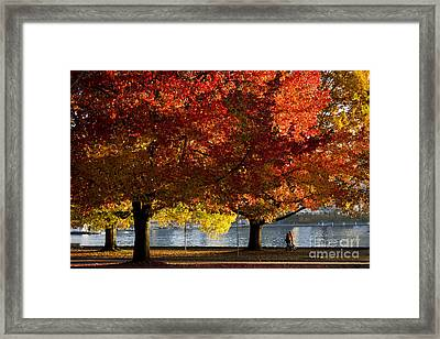 Fall Colour In Stanley Park Framed Print by Maria Janicki