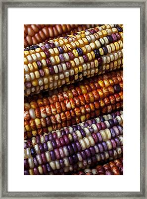 Fall Corn Framed Print by Garry Gay