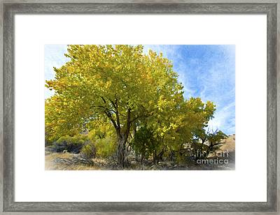 Fall Cottonwoods Framed Print by Dianne Phelps