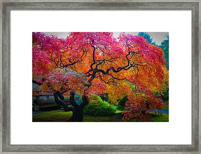 Fall Crowning Glory  Framed Print by Patricia Babbitt