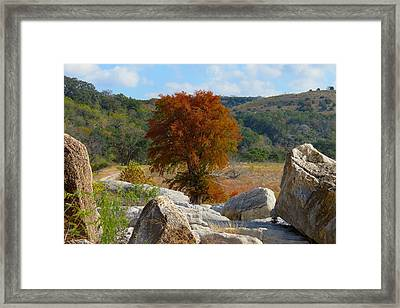 Framed Print featuring the photograph Fall Cypress by David  Norman