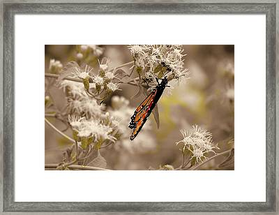 Fall Feeding Framed Print by David  Norman