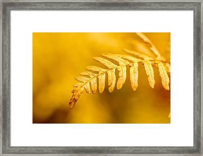 Fall Fern Framed Print