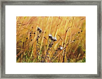 Fall Flowers Framed Print by Mark Russell