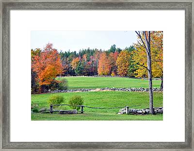 Fall Foliage 6 Framed Print