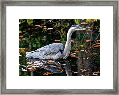 Fall Foliage And Fowl Framed Print by Frozen in Time Fine Art Photography