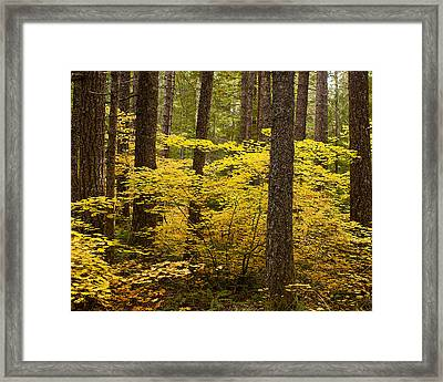 Framed Print featuring the photograph Fall Foliage by Belinda Greb