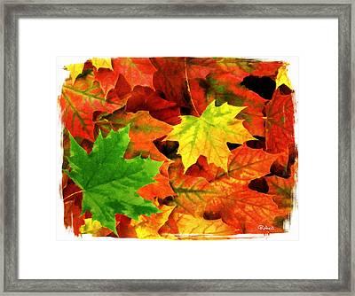 Fall Foliage Framed Print by Bob Sandler