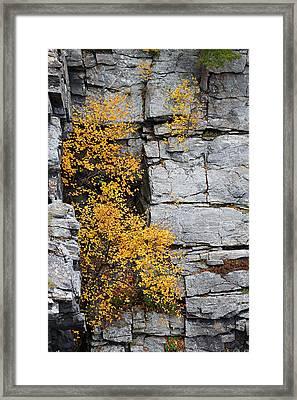 Fall Foliage Colors 01 Framed Print
