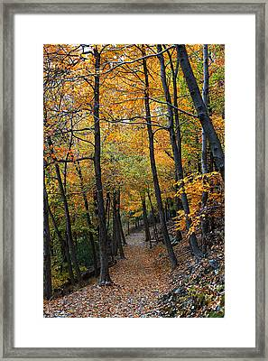 Fall Foliage Colors 03 Framed Print