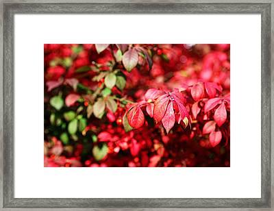 Fall Foliage Colors 10 Framed Print