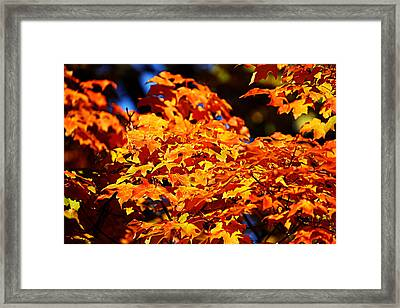 Fall Foliage Colors 16 Framed Print by Metro DC Photography