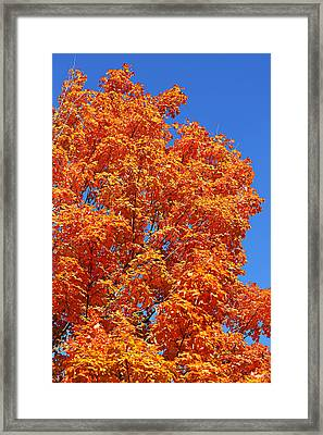 Fall Foliage Colors 18 Framed Print
