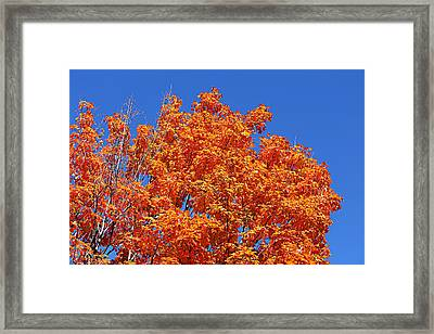 Fall Foliage Colors 19 Framed Print by Metro DC Photography