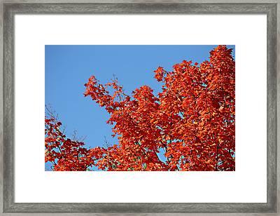 Fall Foliage Colors 20 Framed Print