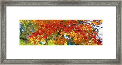 Fall Foliage, Guilford, Baltimore City Framed Print by Panoramic Images