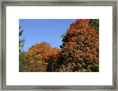 Fall Foliage In The Arboretum Framed Print by Natural Focal Point Photography