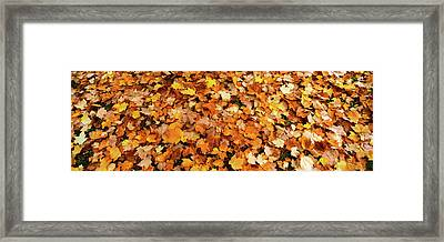 Fall Foliage In The Backyard, Eureka Framed Print by Panoramic Images