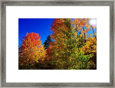 Fall Foliage Palette Framed Print by Scott McGuire