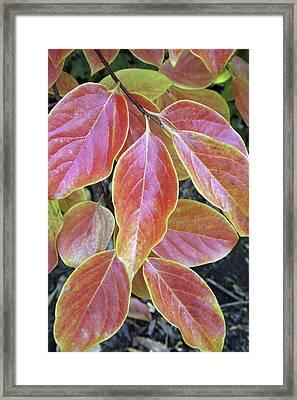Fall Foliage, The Autumn Leaves Framed Print