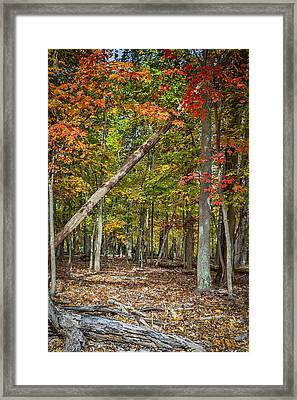 Fall Forest Framed Print by David Cote