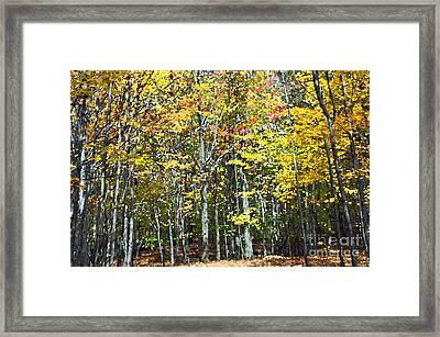Fall Forest Mm Framed Print